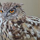 Cedar the Eagle Owl by Blue-goo