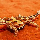Thorny Devil (Moloch horridus) by Shannon Wild
