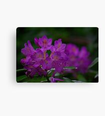 Rhododendron #2 Canvas Print