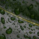 Raindrops by winston53660