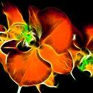 Phaelenopsis by George Kypreos