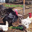 Thanksgiving Greetings by MaeBelle
