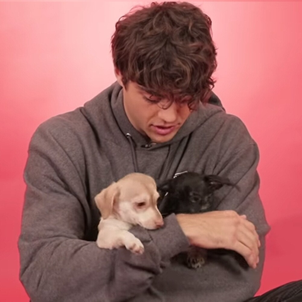 NOAH CENTINEO & PUPPIES by cwxo