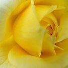 Jodi's Roses 4 by SERENA Boedewig