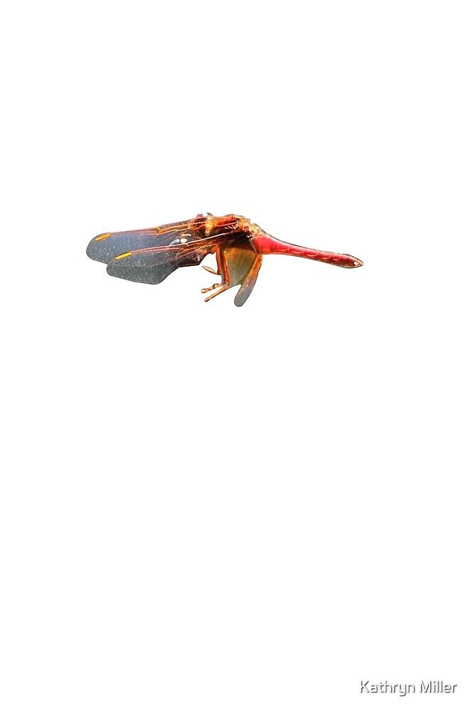 Dragonfly by Kathryn Miller