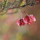 Small Pod/Flower by Joy Watson