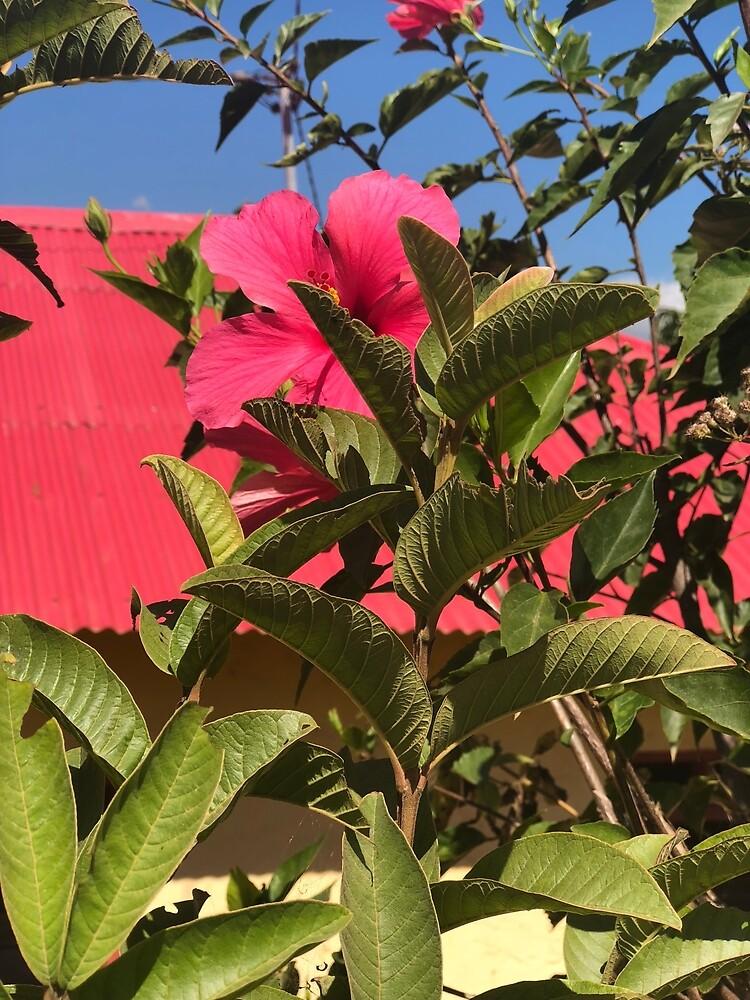 Pink Flower in East Timor by vspicerstuart