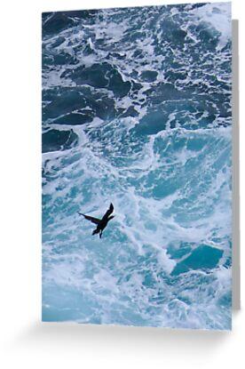 Wild Sea Bird by Tony Skerl