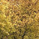 Fall Colors by Lynda Anne Williams