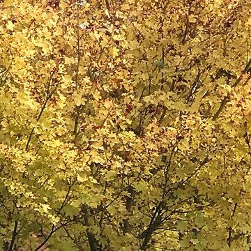 Fall Colors by LyndaAnneArt