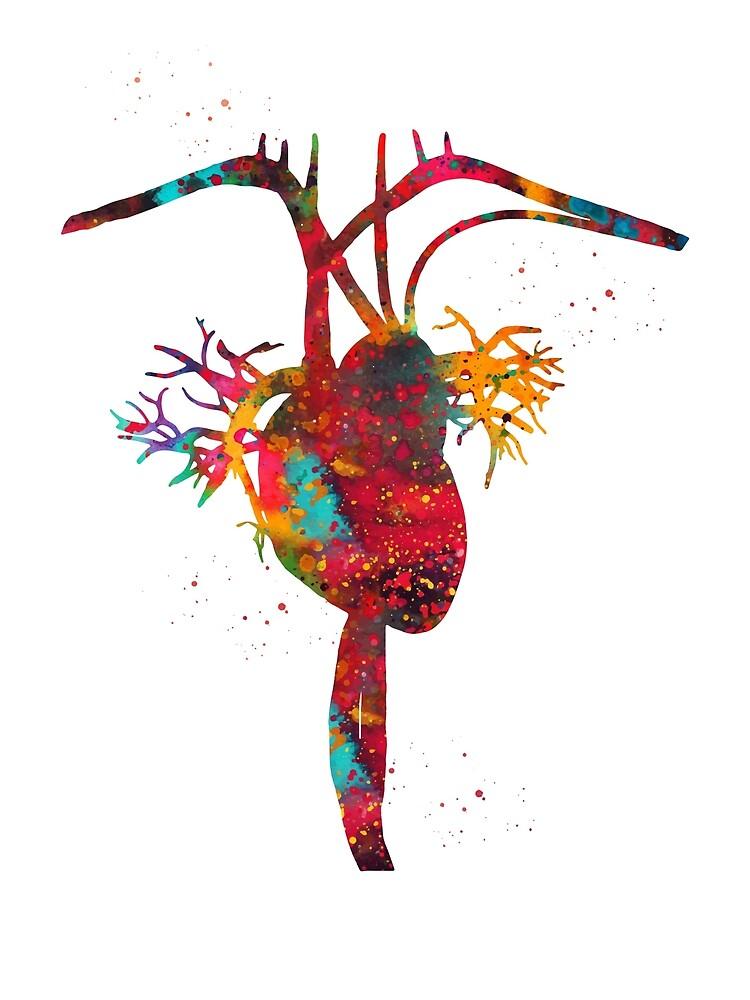 Heart anatomy by erzebetth