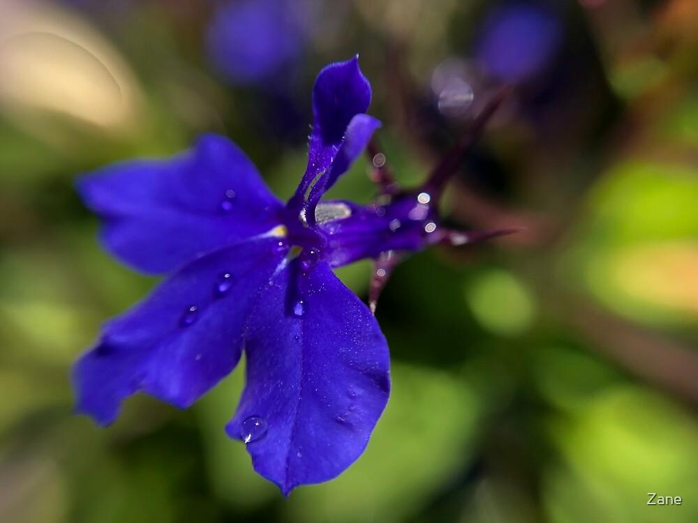 Single flower by Zane