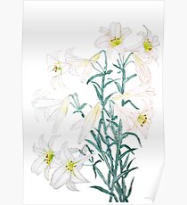 white lily branch watercolor  Poster
