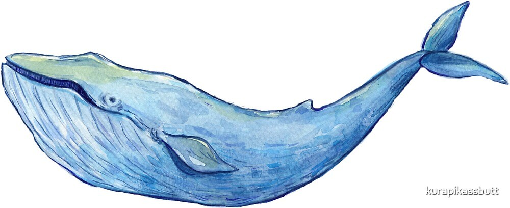 Sperm Whale by kurapikassbutt