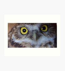 borrowing owl3 Art Print