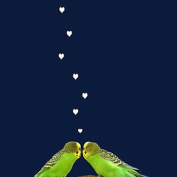 Budgerigar pair kiss 3 by quentinjlang