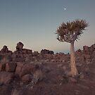 Desert Quiver Tree at dusk - Landscape photography  by lightwanderer