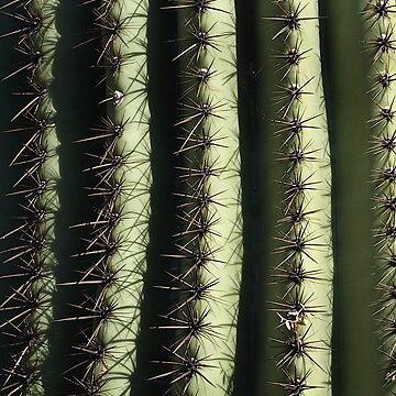cactus by Tanastish