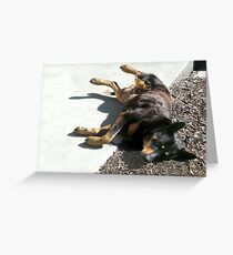 Just a Little Nap... Greeting Card