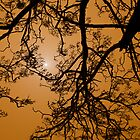 Dust Storm Silhouette by Natsky