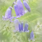 Springtime Flowers. A Floral Melody. Scotland.  by Barbara  Jones ~ PhotosEcosse