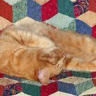 Cat Napping by FrankieCat