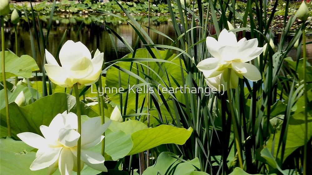 Lotus Paradise by Lynne Kells (earthangel)