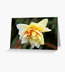 Butterfly daff Greeting Card