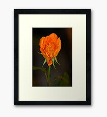 Proud - Featured! Framed Print