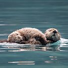 Sea Otter with baby by Eivor Kuchta