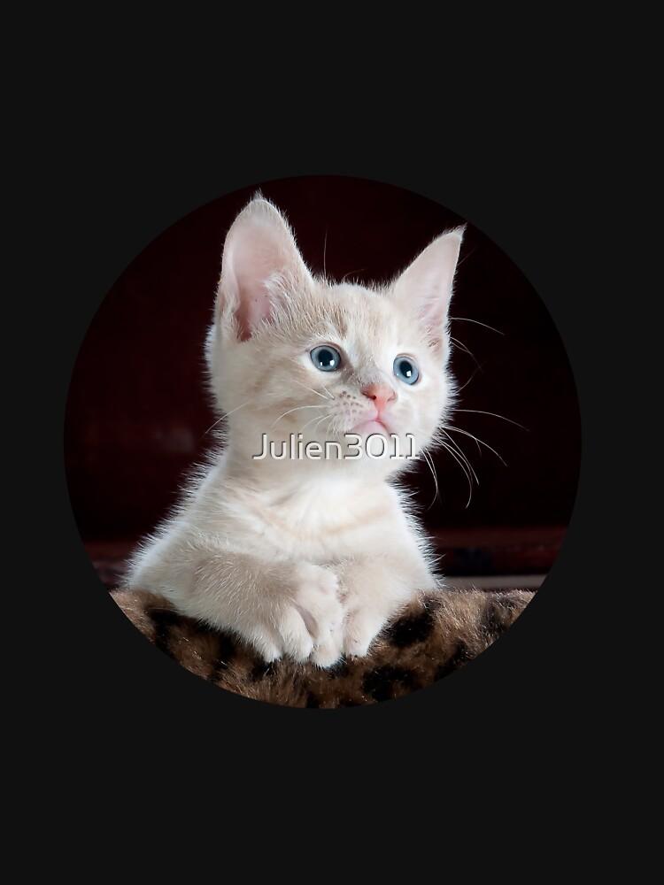 Cute cat by Julien3011