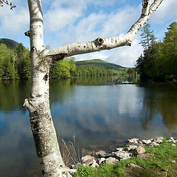 Spring on Woodward Reservoir by srwdesign