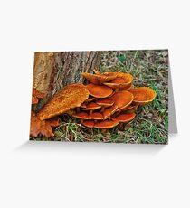 Fungi around the trunk Greeting Card