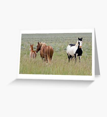 Wild Pinto Stallion, Red Desert Greeting Card