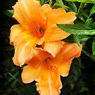 Orange Lily by Roz McQuillan