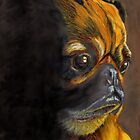 Contemplative Pug by Marcella Chapman