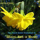 Wales, reich an Schönheit - New Banner von BlueMoonRose