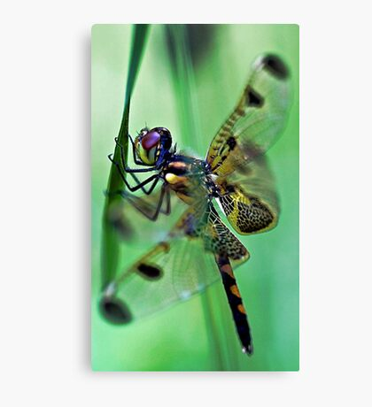 Dragonfly - At Rest Canvas Print