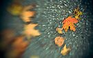 (Early) Autumn Leaves by Aaron Campbell