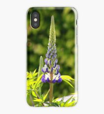 A single lupin iPhone Case/Skin