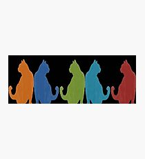Reflected Images Of A Line Of Cats on Black Photographic Print