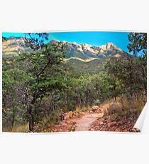 Madera Canyon Trail Poster