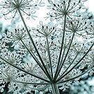 Flower starburst by Sandra O'Connor