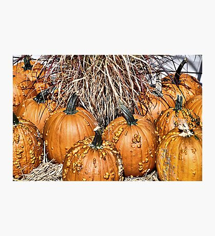 Pumpkin Patch Photographic Print