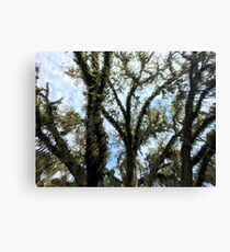 Pouring Moss Canvas Print