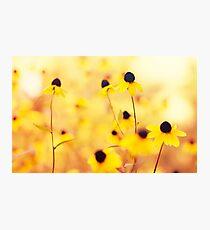Summer Yellow Photographic Print