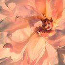 japonica by sabrina card