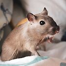 Pepper the Gerbil by Monica Carvalho