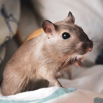 Pepper the Gerbil by mouchette111