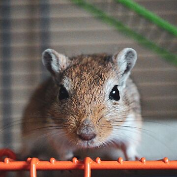 Choc the Gerbil by mouchette111